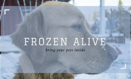 Frozen alive: bring your pets inside during cold weather