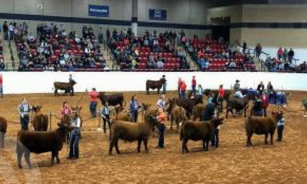 Chapel Hill FFA participates at Fort Worth Stock Show