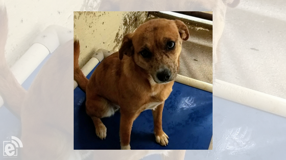 eMtPleasantExtra Pet of the Week – Heidi