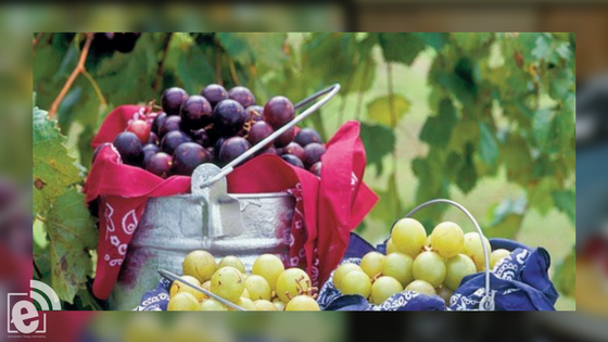 Muscadine Workshop with jelly and wine tasting in Mt. Pleasant