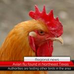Avian flu found at Northeast Texas chicken farm