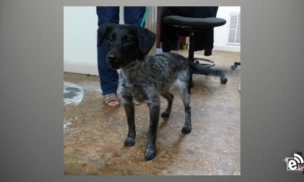 Meet Neva || eMtPleasantExtra pet of the week