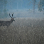 On your mark    General season for deer is about to start