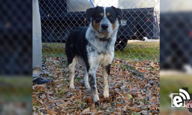Meet Charlie || eMtPleasantExtra Pet of the Week